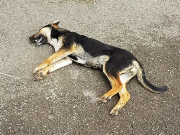 Чемпионат пройдет, а нам как с этим жить? - ростовчанка взбунтовалась из-за массового убийства собак на улицах