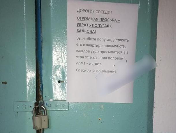 Крикливый попугай превратил жизнь ростовской многоэтажки в ад