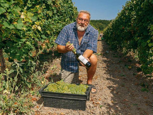 Единственный лицензированный винодел Ростовской области готов продать бизнес