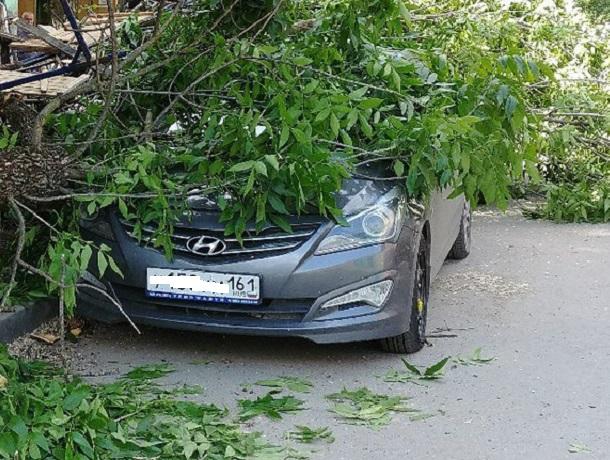 Дерево упало надва автомобиля вРостове-на-Дону