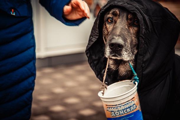 «Мы не издеваемся, мы их кормим»: хозяин собаки-попрошайки ответил на обвинения в живодерстве