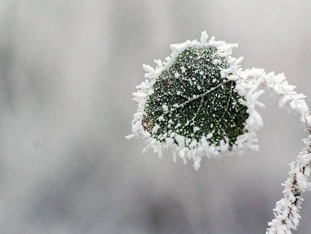 В Ростовскую область возвращаются заморозки