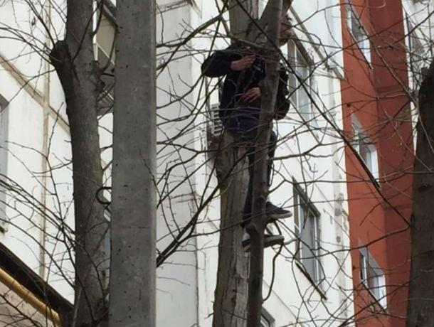 Бесстрашный ростовчанин спас котенка, которого на дерево загнала собака