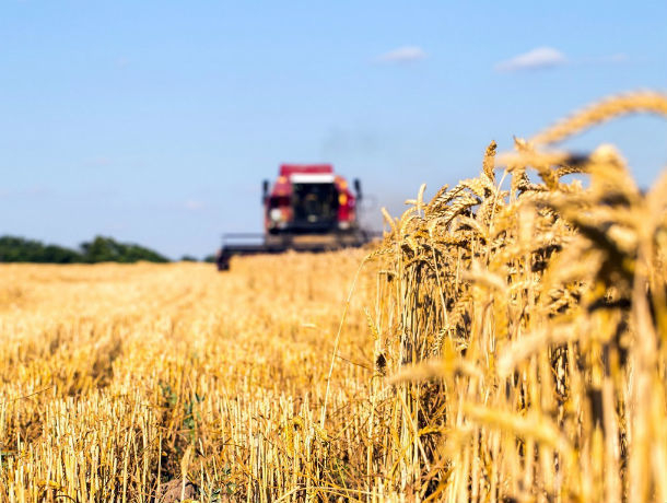 Отраслевой сельскохозяйственный хаб появился на Юге России