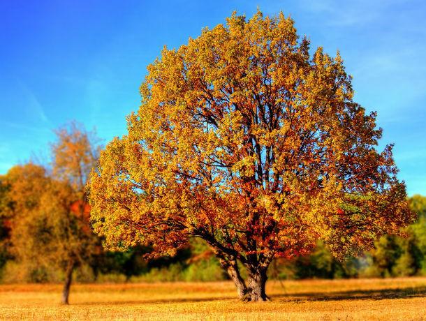 Теплый, ясный понедельник: какая погода ждет ростовчан 14 октября