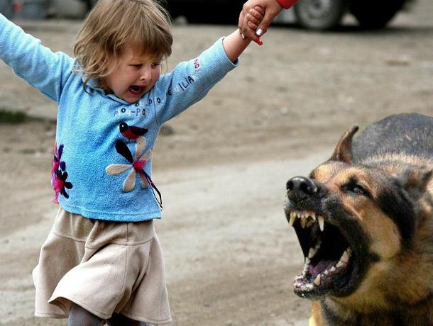 Бездомная собака в кровь растерзала двухлетнюю девочку на улице Ростова