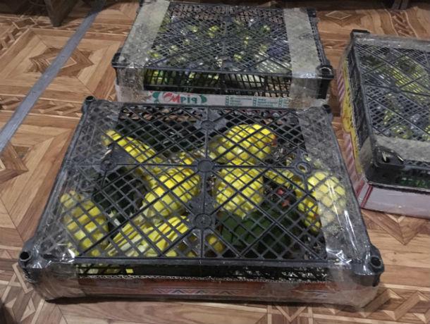 Свободу попугаям: под Ростовом задержали контрабандистов, пытавшихся провезти декоративных птиц