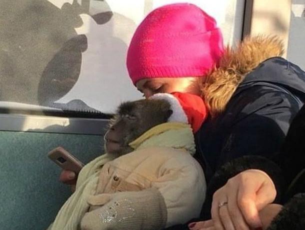 Прокатившаяся в автобусе с «особенным» ребенком на руках женщина вызвала истерику у жителей Ростова