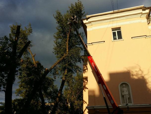 «Облысевшие» ростовские деревья посоветовали воспринимать как вынужденную меру