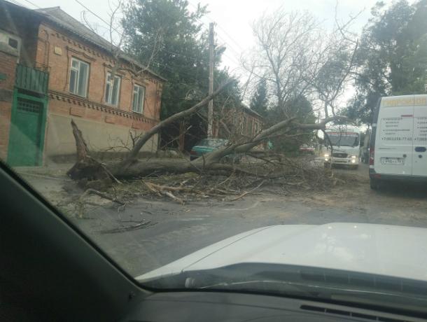 Обрушившееся на дорогу огромное дерево перекрыло популярный маршрут автомобилистам Ростова