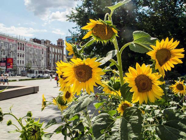Неделя чрезвычайно комфортной погоды в Ростове стартует 21 июля