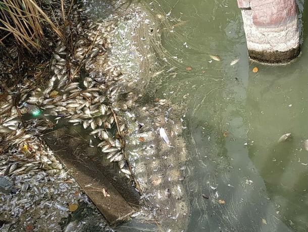 Разлагающаяся в пруду зоопарка рыба встревожила ростовчан
