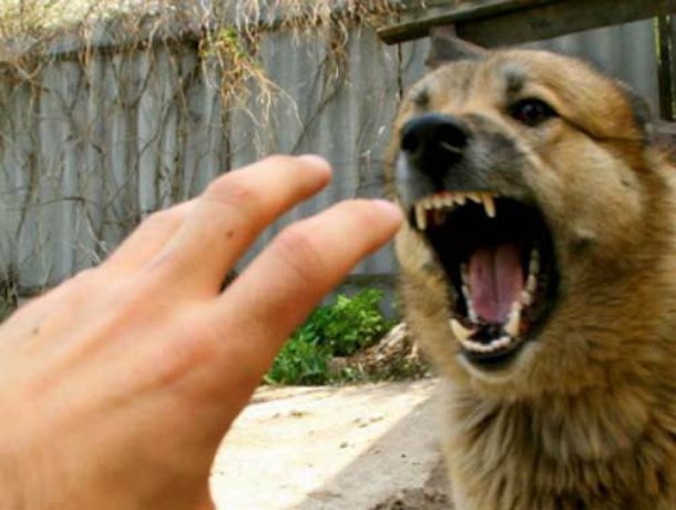 Бездомная собака порвала пнувшего ее пьяного прохожего в Ростове
