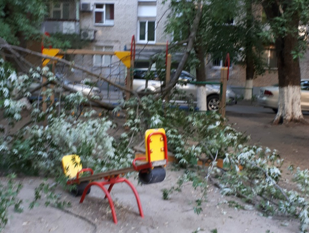 Огромное дерево с треском обрушилось на детскую площадку в Ростове
