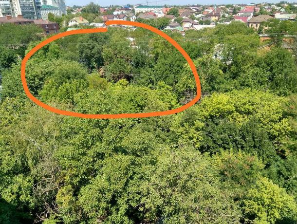 Здоровые зеленые деревья вырубят в Ростове ради новой стройки