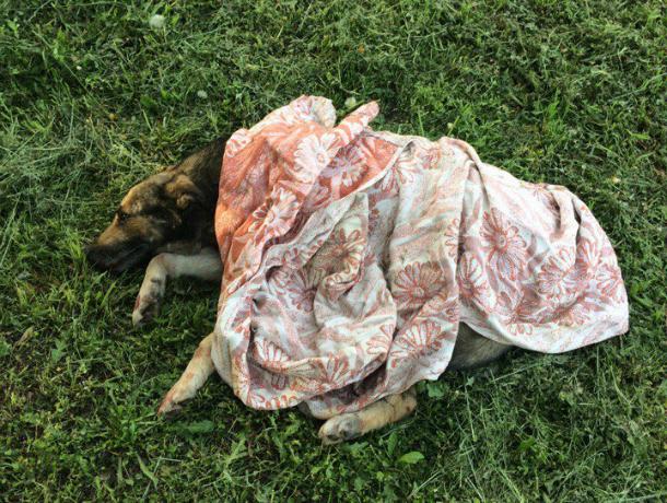Сбивший насмерть собаку у здания училища водитель вызвал негодование у жителей Ростова