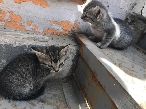 Чудесных котят выбросил мужчина в мусорный контейнер рядом с Домом правительства в Ростове