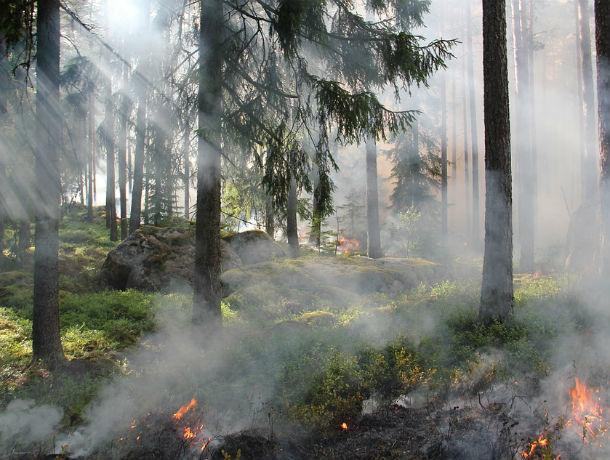Спасатели предупредили ростовчан о высокой пожароопасности