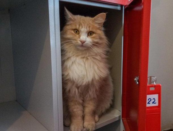 Охранник семейства кошачьих завелся в супермаркете Ростова-на-Дону