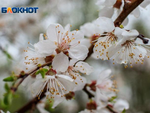Прохладно, но без осадков: рассказываем о погоде в Ростове в четверг, 18 апреля