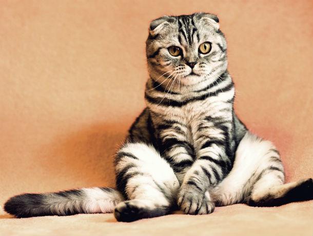 Мартовский кот: циничные ростовские ветеринары проведут стерилизацию домашних животных