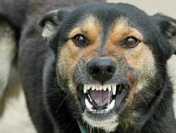 Бешеный пес жестоко искусал двух рабочих в Ростовской области