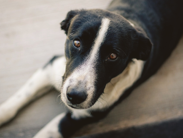 На дом для бродячих собак под Ростовом выделят почти 12 млн рублей