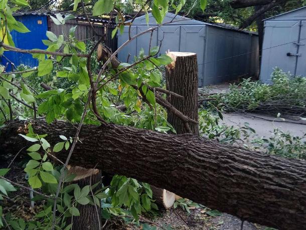Сразу пять гнилых деревьев рухнули на Западном в Ростове