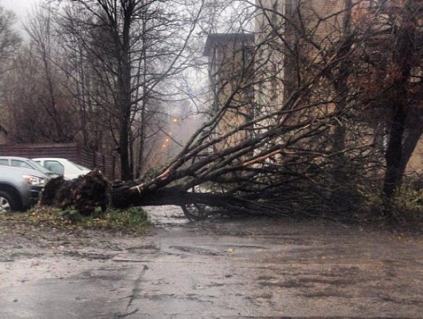 Упавшее дерево в центре Ростова перегородило проезжую часть
