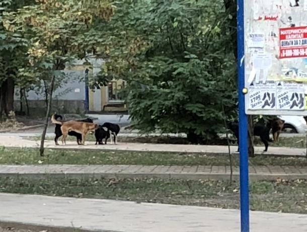 Атаковавшая детский парк стая «безбирочных» дворняжек доводит до бешенства мамочек Ростова