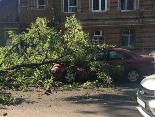 Огромная ветка рухнула на три припаркованных автомобиля в центре Ростова