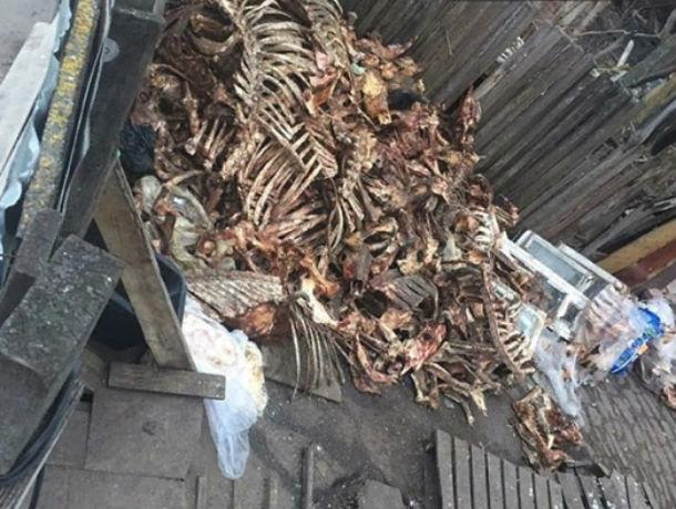 В подворотне Ростова обнаружили гору обглоданных костей