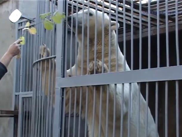 До свидания, мой ласковый мишка: Тепрей из ростовского зоопарка переехал в Казань к невесте