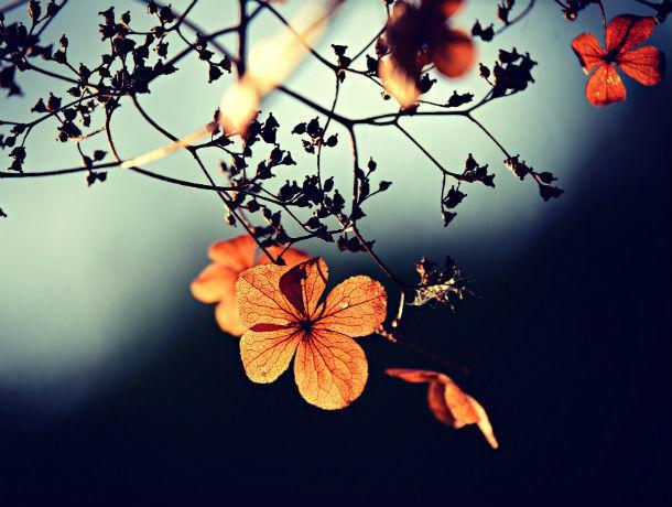 Прохладный и ветреный день: какая погода ожидает ростовчан 14 ноября