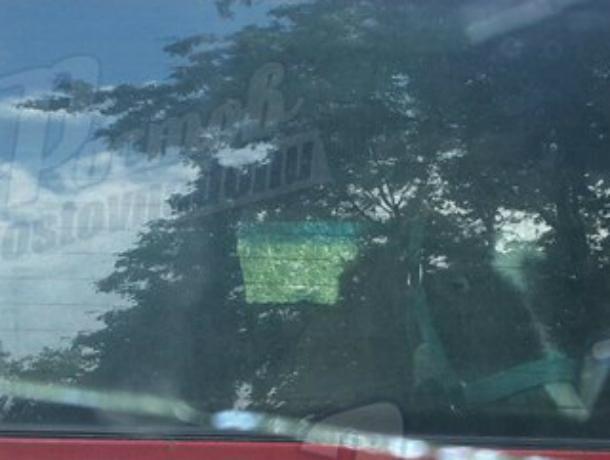 «Бешеный» пони в багажнике автомобиля вызвал смех и недоумение у жителей Ростова