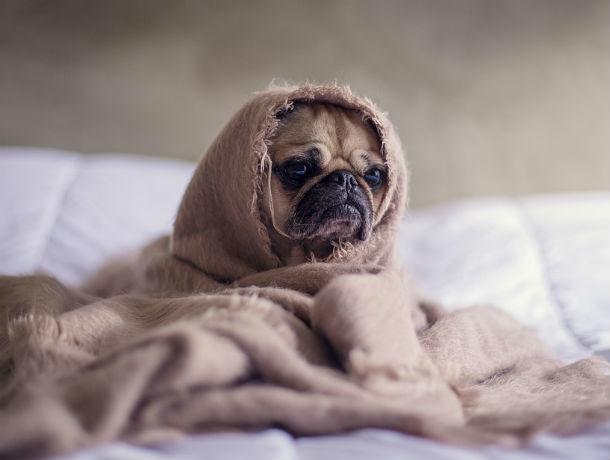 Боремся с холодом и сквозняками