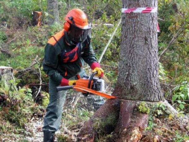 Вырубать деревья ради строительства парка - полный абсурд, но в Ростове так делают, - эксперт