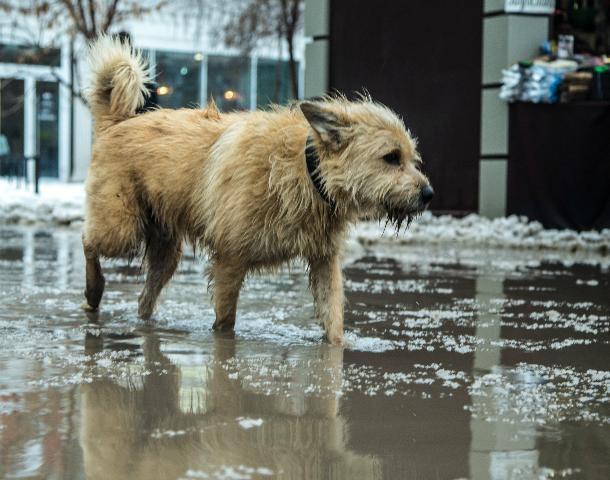 Ростовчанину, сбросившему с седьмого этажа щенка, грозит три года колонии