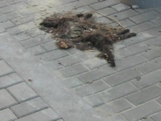 Ставшая частью дизайна обновленного центра Ростова мертвая кошка нагоняет тоску на местных жителей