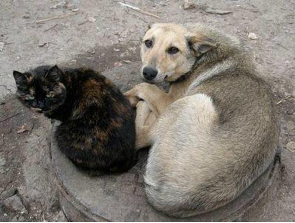 ВРостовской области бездомных животных запретят возвращать наулицы