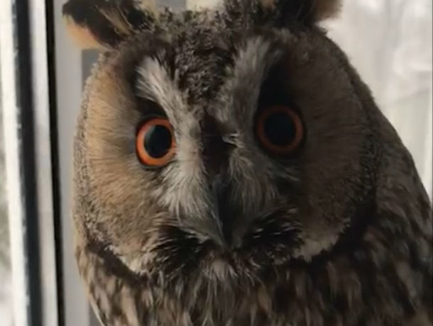 Сова в шоке: реакция птицы на снег в Ростове