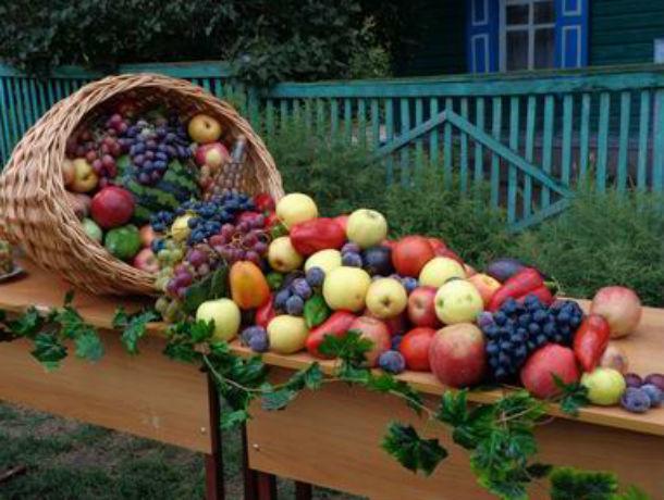 В тройку лучших фестивалей для туристов вошла ростовская «Донская лоза»