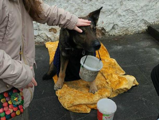 Ставшая живой игрушкой для прохожих собака-попрошайка вызвала жалость у жителей Ростова