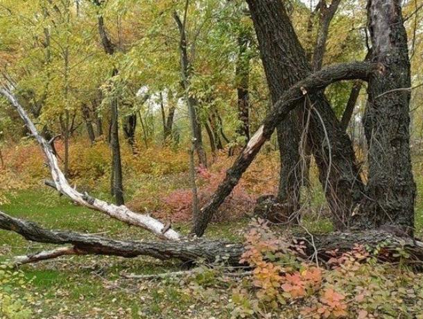 Ростовские защитники природы не против вырубить четыре тысячи деревьев ради парка