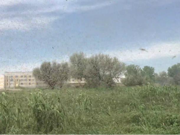 Огромная туча комаров закрыла небо в погожий день в Ростовской области и попала на видео
