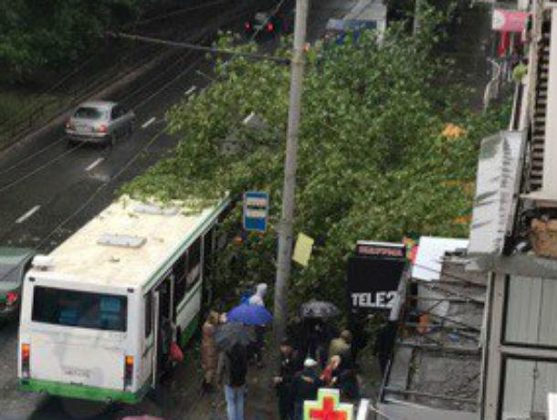 Наженщину упало дерево наавтобусной остановке вРостове