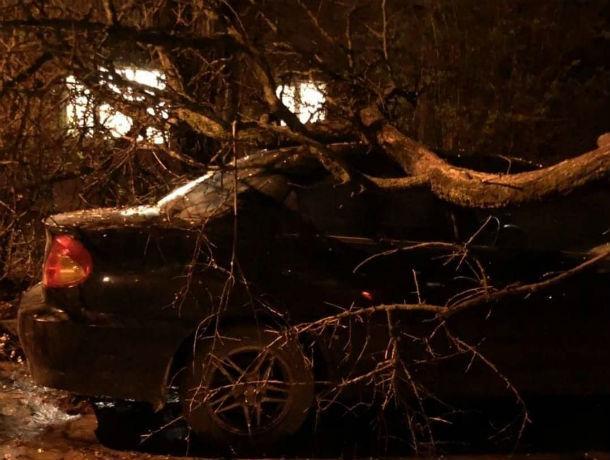 Водитель еще не знает: большая ветка упала на иномарку в Ростове