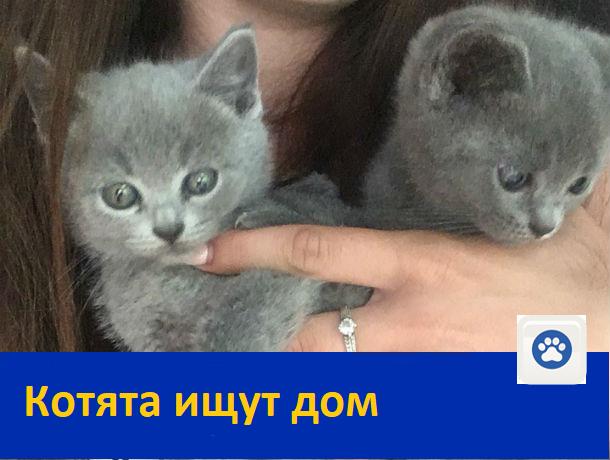 Милые котята ищут себе дом