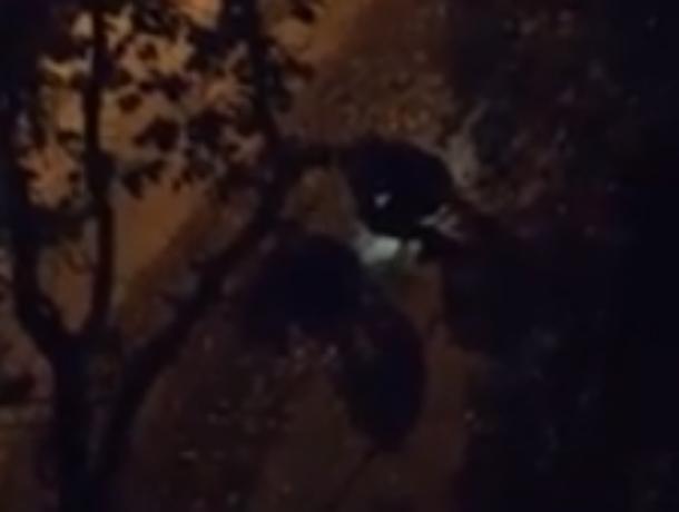 Перекопавшие двор многоэтажки с фонариком ночные кладоискатели в Ростове попали на видео