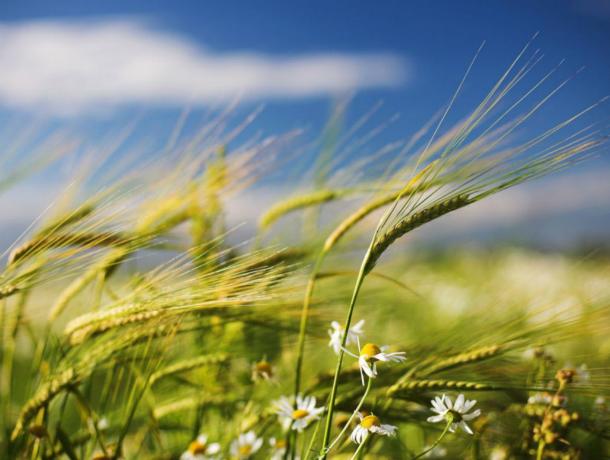 Освежающий ветерок будет обдувать жителей Ростова в эту теплую августовскую пятницу
